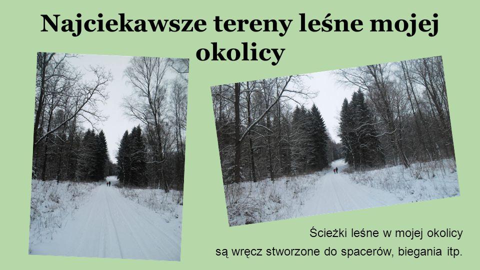 Najciekawsze tereny leśne mojej okolicy Ścieżki leśne w mojej okolicy są wręcz stworzone do spacerów, biegania itp.