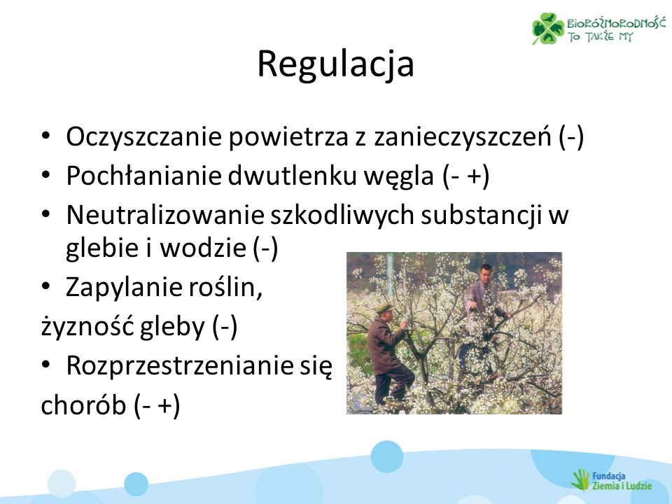 Regulacja Oczyszczanie powietrza z zanieczyszczeń (-) Pochłanianie dwutlenku węgla (- +) Neutralizowanie szkodliwych substancji w glebie i wodzie (-) Zapylanie roślin, żyzność gleby (-) Rozprzestrzenianie się chorób (- +)
