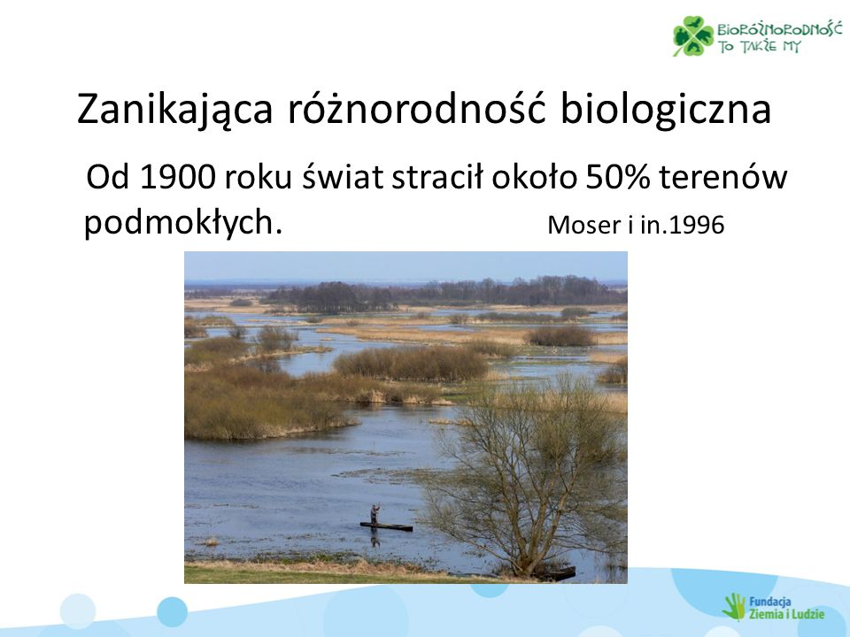 Zanikająca różnorodność biologiczna Od 1900 roku świat stracił około 50% terenów podmokłych. Moser i in.1996
