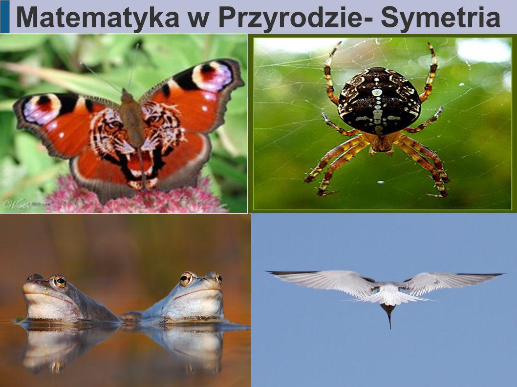 Matematyka w Przyrodzie Figury Podobne Figury, mające ten sam kształt, a różniące się co najwyżej wielkością, nazywamy figurami podobnymi.