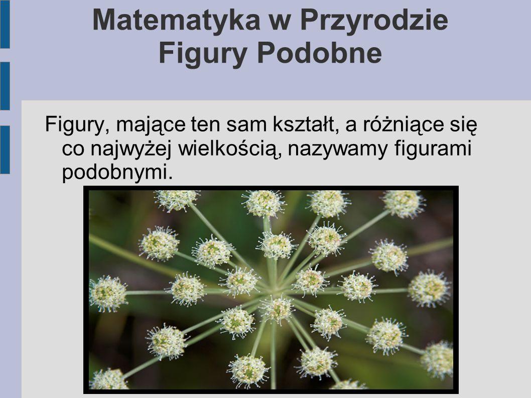 Matematyka w Przyrodzie Figury Podobne