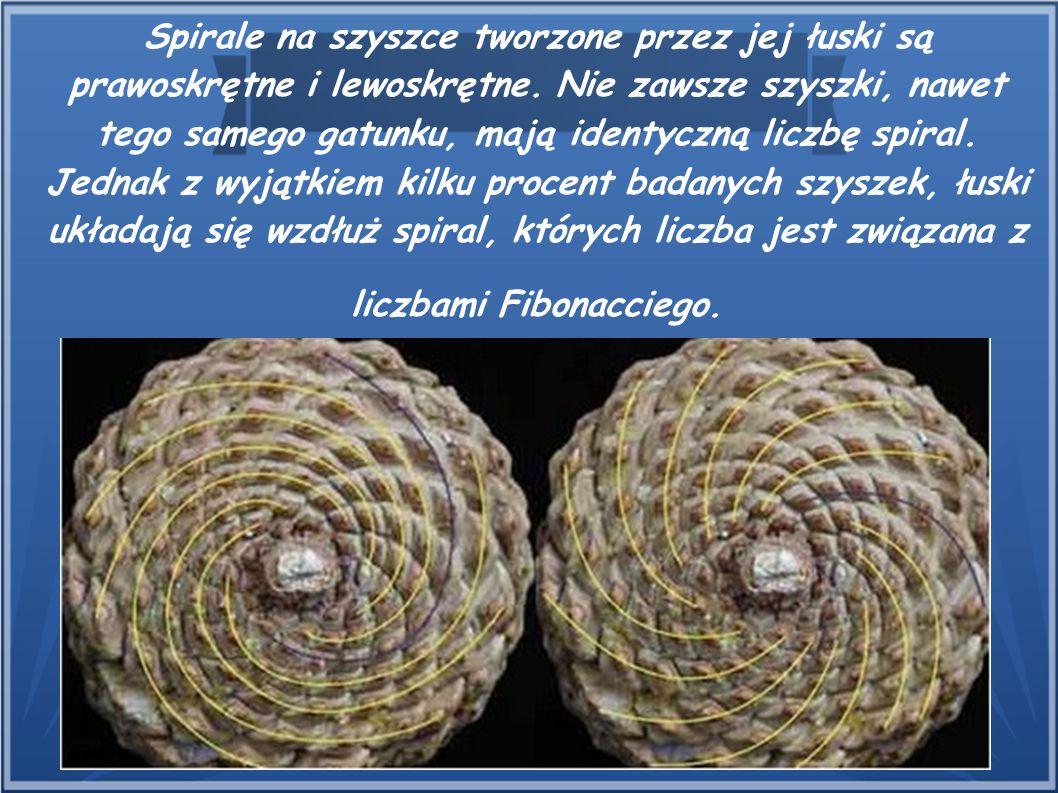 Spirale na szyszce tworzone przez jej łuski są prawoskrętne i lewoskrętne. Nie zawsze szyszki, nawet tego samego gatunku, mają identyczną liczbę spira