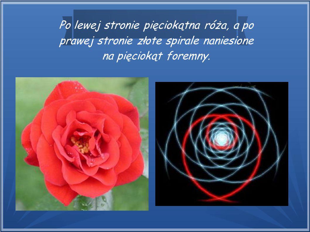 Po lewej stronie pięciokątna róża, a po prawej stronie złote spirale naniesione na pięciokąt foremny.