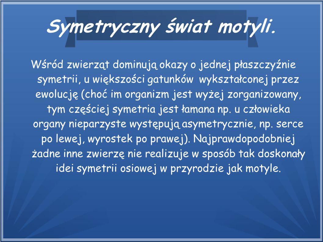 Symetryczny świat motyli. Wśród zwierząt dominują okazy o jednej płaszczyźnie symetrii, u większości gatunków wykształconej przez ewolucję (choć im or