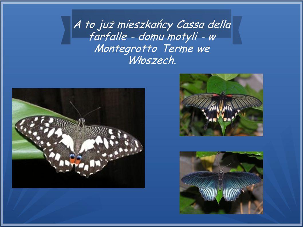 A to już mieszkańcy Cassa della farfalle - domu motyli - w Montegrotto Terme we Włoszech.