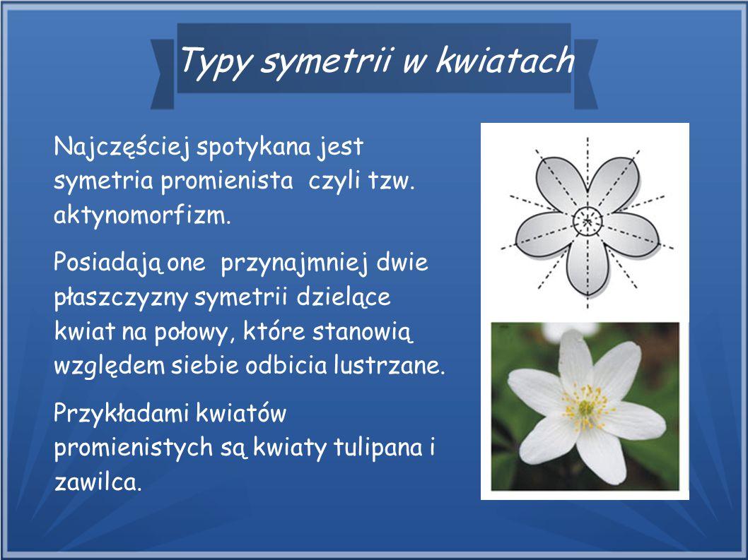 Typy symetrii w kwiatach Najczęściej spotykana jest symetria promienista czyli tzw. aktynomorfizm. Posiadają one przynajmniej dwie płaszczyzny symetri
