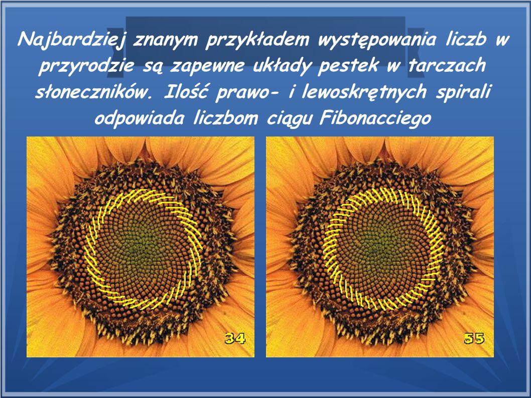 Najbardziej znanym przykładem występowania liczb w przyrodzie są zapewne układy pestek w tarczach słoneczników. Ilość prawo- i lewoskrętnych spirali o