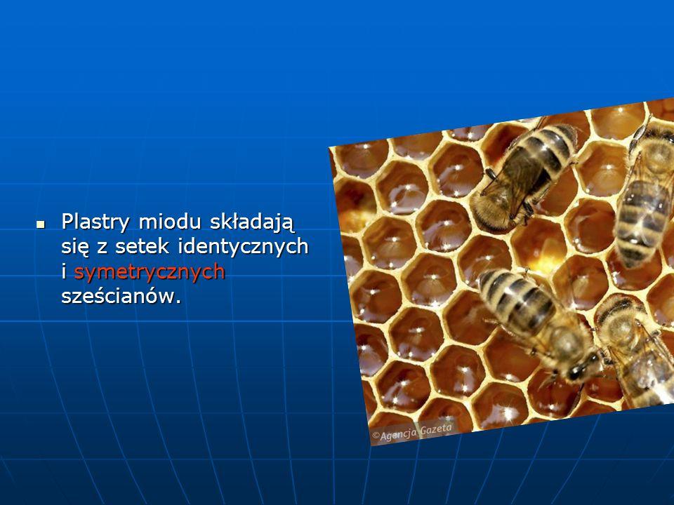 Plastry miodu składają się z setek identycznych i symetrycznych sześcianów. Plastry miodu składają się z setek identycznych i symetrycznych sześcianów
