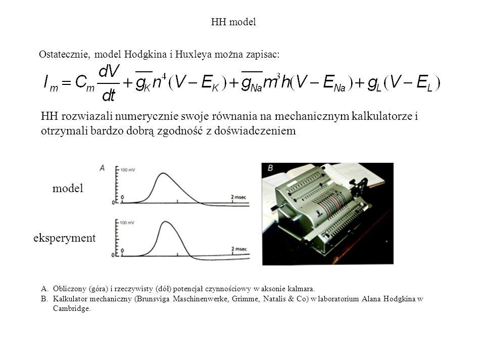 Ostatecznie, model Hodgkina i Huxleya można zapisac: HH model HH rozwiazali numerycznie swoje równania na mechanicznym kalkulatorze i otrzymali bardzo