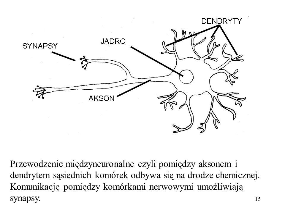 15 Przewodzenie międzyneuronalne czyli pomiędzy aksonem i dendrytem sąsiednich komórek odbywa się na drodze chemicznej. Komunikację pomiędzy komórkami
