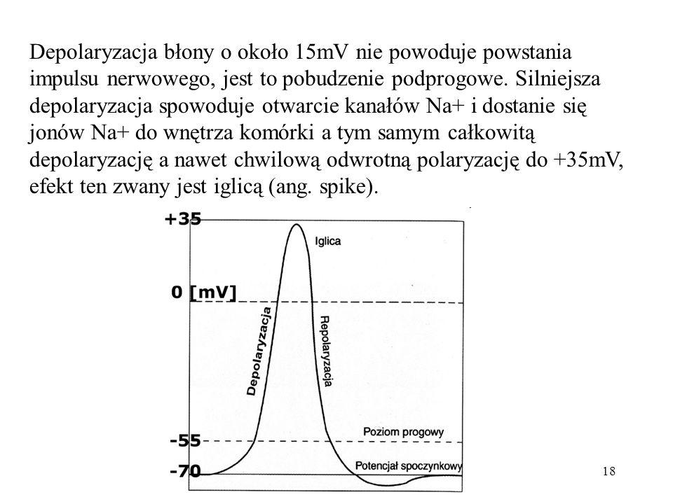 18 Depolaryzacja błony o około 15mV nie powoduje powstania impulsu nerwowego, jest to pobudzenie podprogowe. Silniejsza depolaryzacja spowoduje otwarc