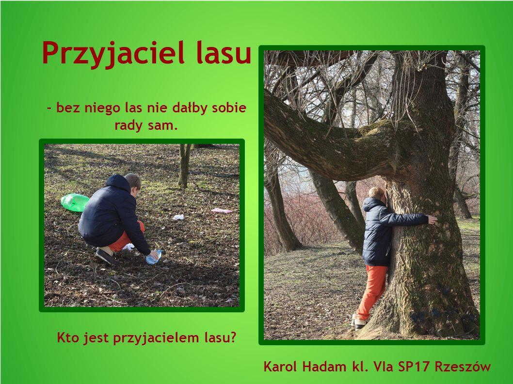 Przyjaciel lasu - bez niego las nie dałby sobie rady sam. Kto jest przyjacielem lasu? Karol Hadam kl. VIa SP17 Rzeszów