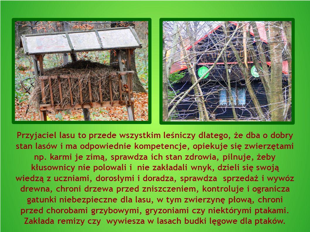 Przyjaciel lasu to przede wszystkim leśniczy dlatego, że dba o dobry stan lasów i ma odpowiednie kompetencje, opiekuje się zwierzętami np. karmi je zi