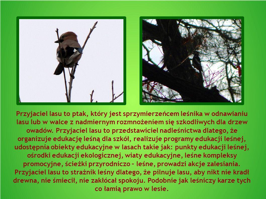 Przyjaciel lasu to ptak, który jest sprzymierzeńcem leśnika w odnawianiu lasu lub w walce z nadmiernym rozmnożeniem się szkodliwych dla drzew owadów.