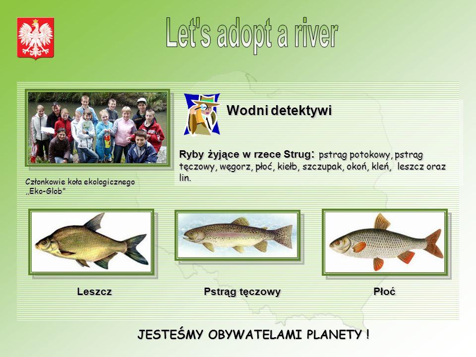 JESTEŚMY OBYWATELAMI PLANETY ! Wodni detektywi Ryby żyjące w rzece Strug : pstrąg potokowy, pstrąg tęczowy, węgorz, płoć, kiełb, szczupak, okoń, kleń,