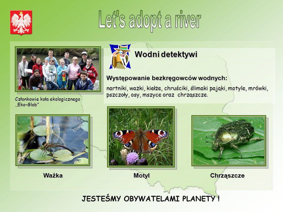 JESTEŚMY OBYWATELAMI PLANETY ! Wodni detektywi Występowanie bezkręgowców wodnych: nartniki, ważki, kiełże, chruściki, ślimaki pająki, motyle, mrówki,