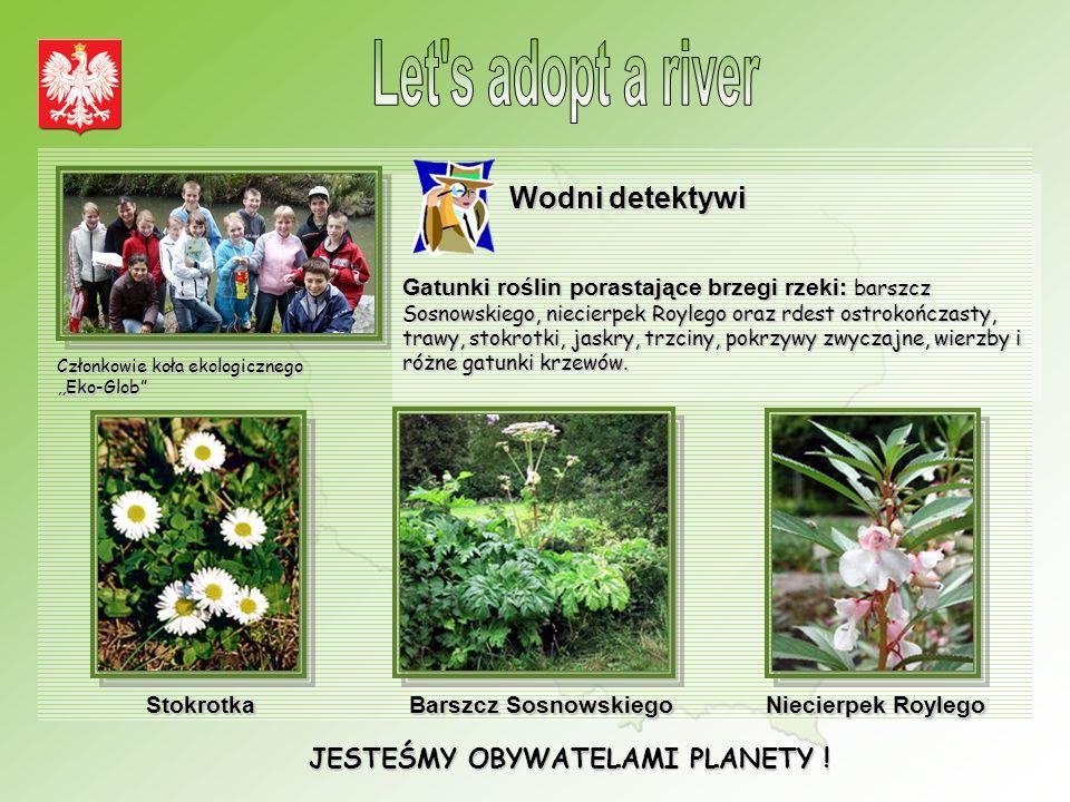 JESTEŚMY OBYWATELAMI PLANETY ! Wodni detektywi Gatunki roślin porastające brzegi rzeki: barszcz Sosnowskiego, niecierpek Roylego oraz rdest ostrokończ