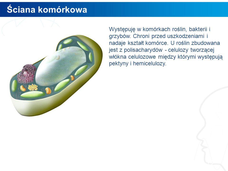 Ściana komórkowa 12 Występuję w komórkach roślin, bakterii i grzybów.