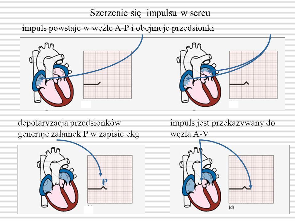 Szerzenie się impulsu w sercu impuls powstaje w węźle A-P i obejmuje przedsionki depolaryzacja przedsionków generuje załamek P w zapisie ekg impuls jest przekazywany do węzła A-V P