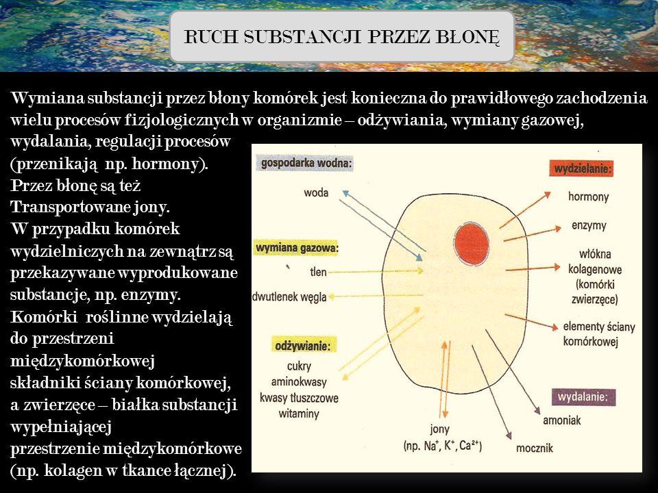 RUCH SUBSTANCJI PRZEZ B Ł ON Ę Wymiana substancji przez b ł ony komórek jest konieczna do prawid ł owego zachodzenia wielu procesów fizjologicznych w