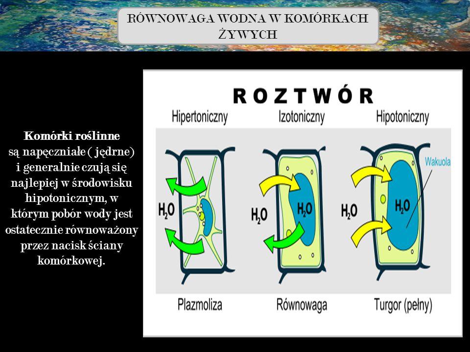 Komórki ro ś linne s ą nap ę cznia ł e ( j ę drne) i generalnie czuj ą si ę najlepiej w ś rodowisku hipotonicznym, w którym pobór wody jest ostateczni