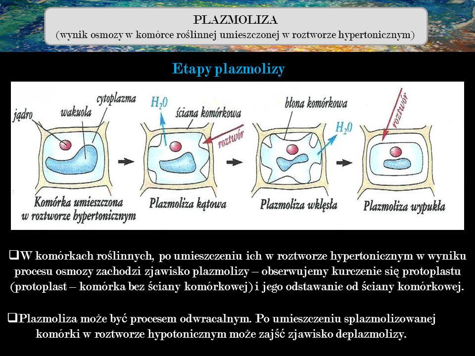 PLAZMOLIZA (wynik osmozy w komórce ro ś linnej umieszczonej w roztworze hypertonicznym)  W komórkach ro ś linnych, po umieszczeniu ich w roztworze hy