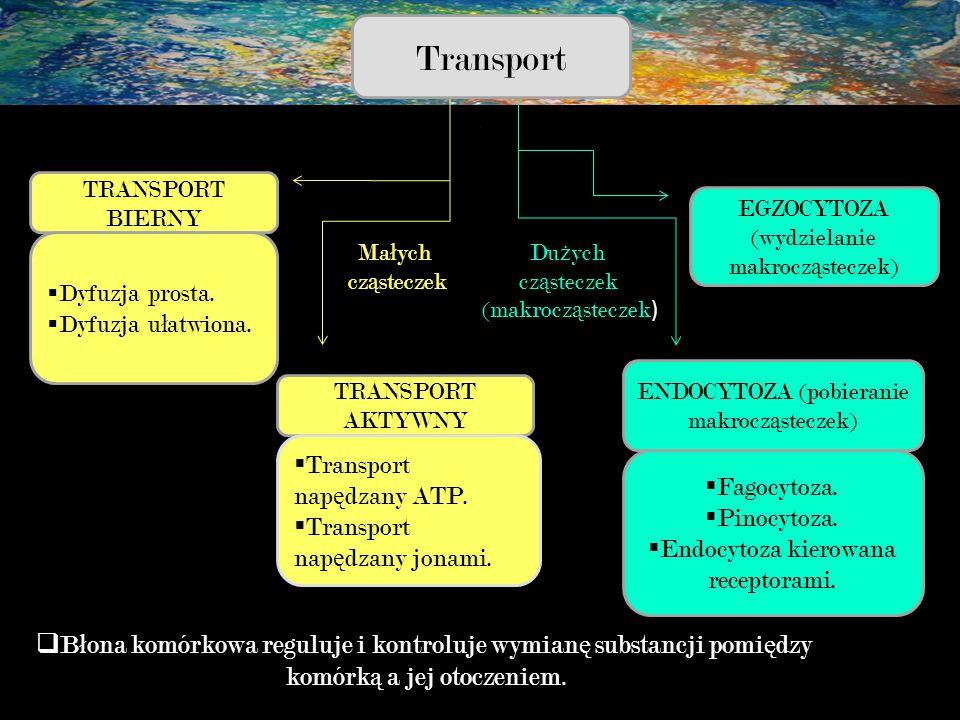 Transport TRANSPORT BIERNY  Dyfuzja prosta.  Dyfuzja u ł atwiona. TRANSPORT AKTYWNY  Transport nap ę dzany ATP.  Transport nap ę dzany jonami. EGZ