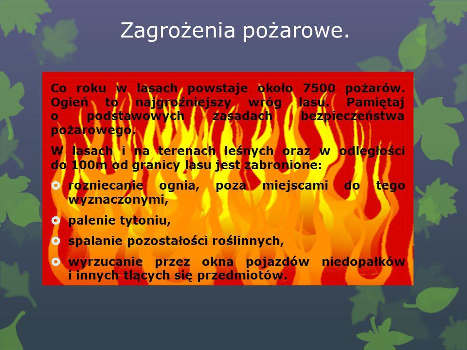 Zagrożenia pożarowe.Co roku w lasach powstaje około 7500 pożarów.