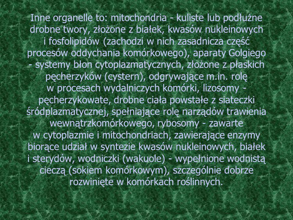 Inne organelle to: mitochondria - kuliste lub podłużne drobne twory, złożone z białek, kwasów nukleinowych i fosfolipidów (zachodzi w nich zasadnicza