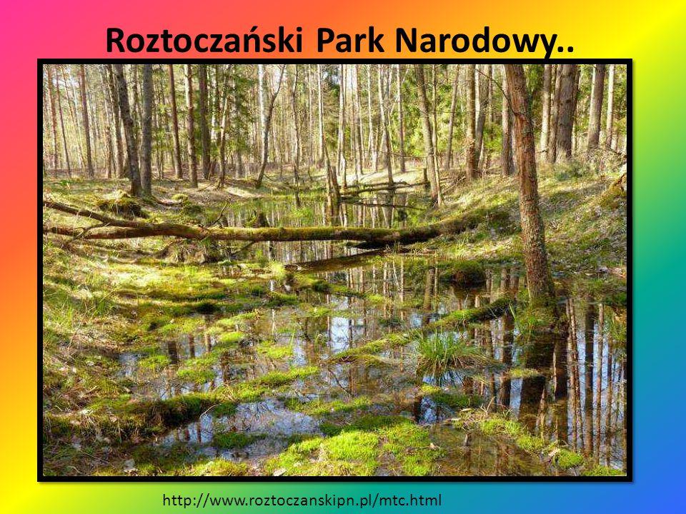 Roztoczański Park Narodowy.. Położenie Parku Narodowego http://wedkomania.pl/lowiska.php?id=33 Krajobraz Parku Narodowego http://izbapamieci.gminazamo