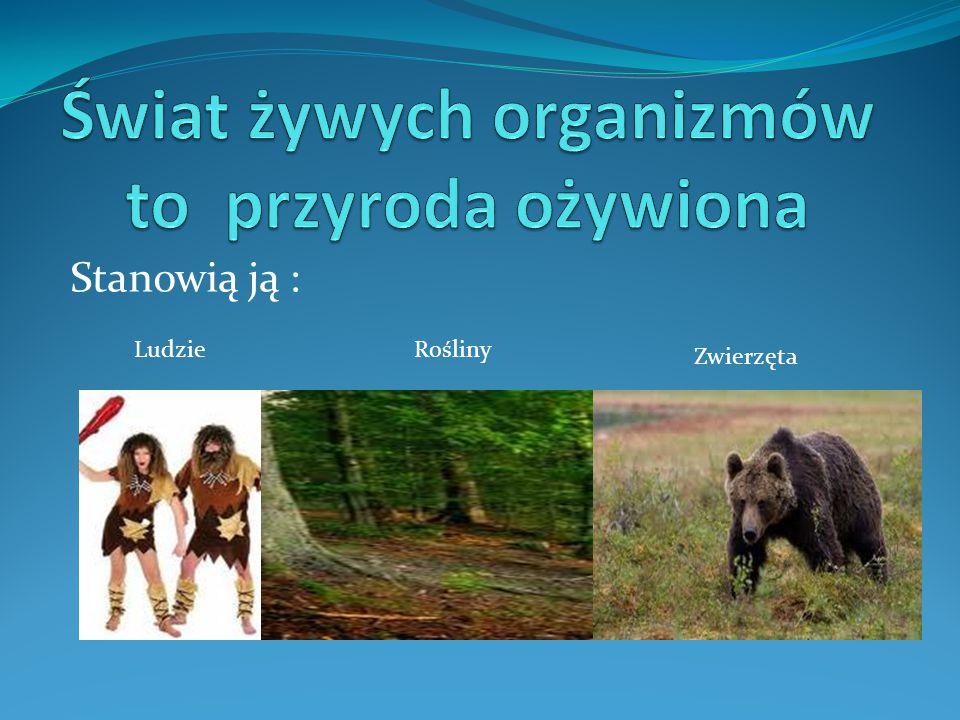 Charakterystyczne cechy budowy : Żyją we wszystkich środowiskach Głównie drapieżniki Głowotułów i odwłok 4 pary odnóży