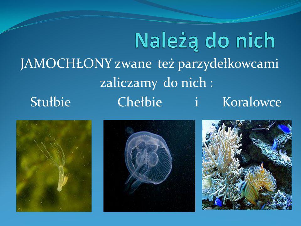 JAMOCHŁONY zwane też parzydełkowcami zaliczamy do nich : Stułbie Chełbie i Koralowce