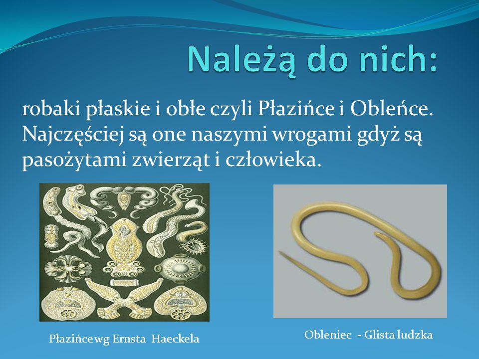Płazińce wg Ernsta Haeckela Obleniec - Glista ludzka robaki płaskie i obłe czyli Płazińce i Obleńce.