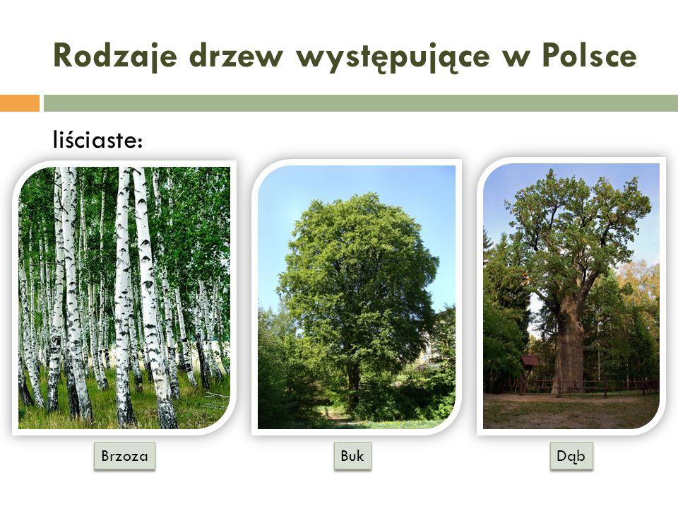 Rodzaje drzew występujące w Polsce liściaste: Dąb Buk Brzoza