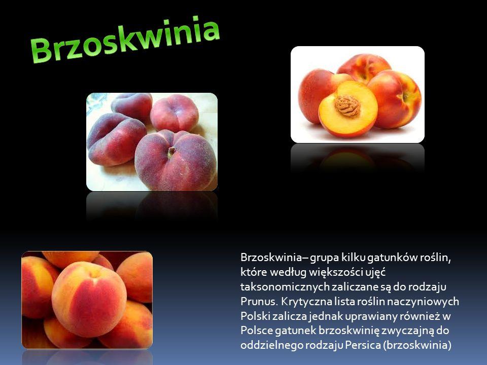 Wiśnia (Cerasus Mill.) – rodzaj roślin należący do rodziny różowatych (Rosaceae).