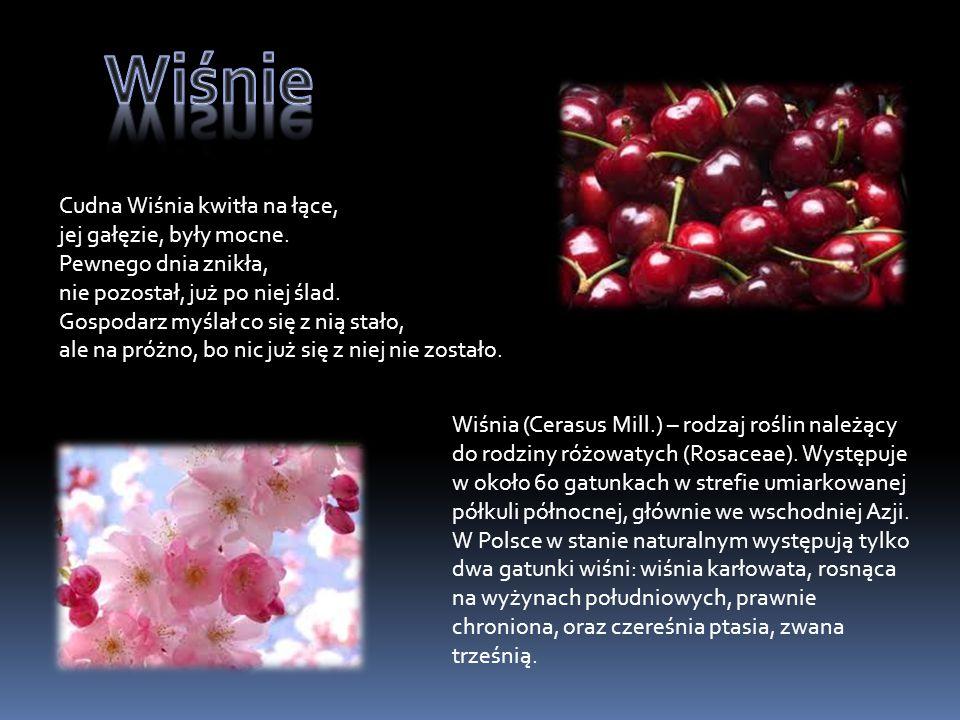Malina - grupa gatunków z rodzaju wyróżniana zwyczajowo ze względu na czerwoną barwę owoców i łatwość ich odpadania od dna kwiatowego (pozostałe gatunki noszą zwyczajową nazwę rodzajową jeżyna).