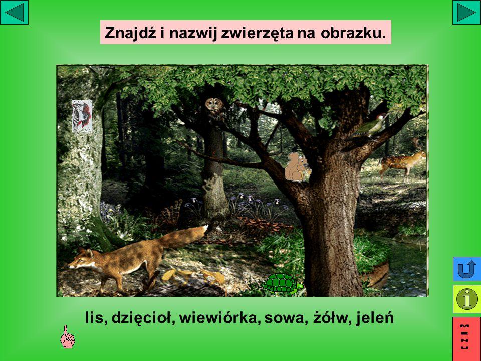 Znajdź i nazwij zwierzęta na obrazku. lis, dzięcioł, wiewiórka, sowa, żółw, jeleń