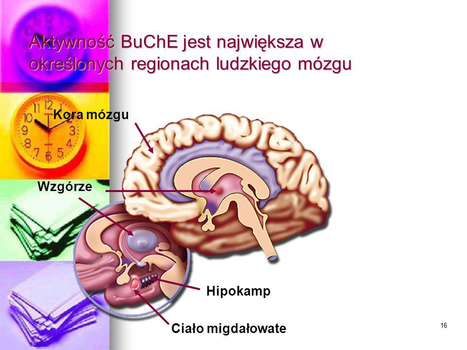 15 Zarówno AChE, jak i BuChE obniżają poziom ACh w mózgu 3. AChE + BuChE hydroliza ACh 1. Bodziec elektryczny powoduje uwolnienie ACh 2. ACh przenika