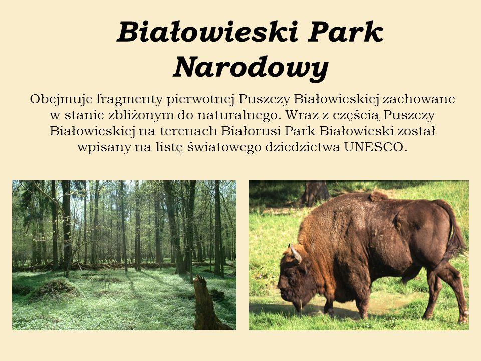 Białowieski Park Narodowy Obejmuje fragmenty pierwotnej Puszczy Białowieskiej zachowane w stanie zbliżonym do naturalnego. Wraz z częścią Puszczy Biał