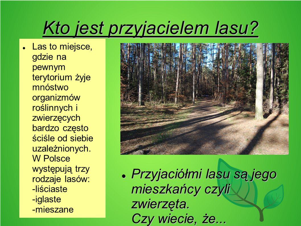 Kto jest przyjacielem lasu? Przyjaciółmi lasu są jego mieszkańcy czyli zwierzęta. Czy wiecie, że... Przyjaciółmi lasu są jego mieszkańcy czyli zwierzę