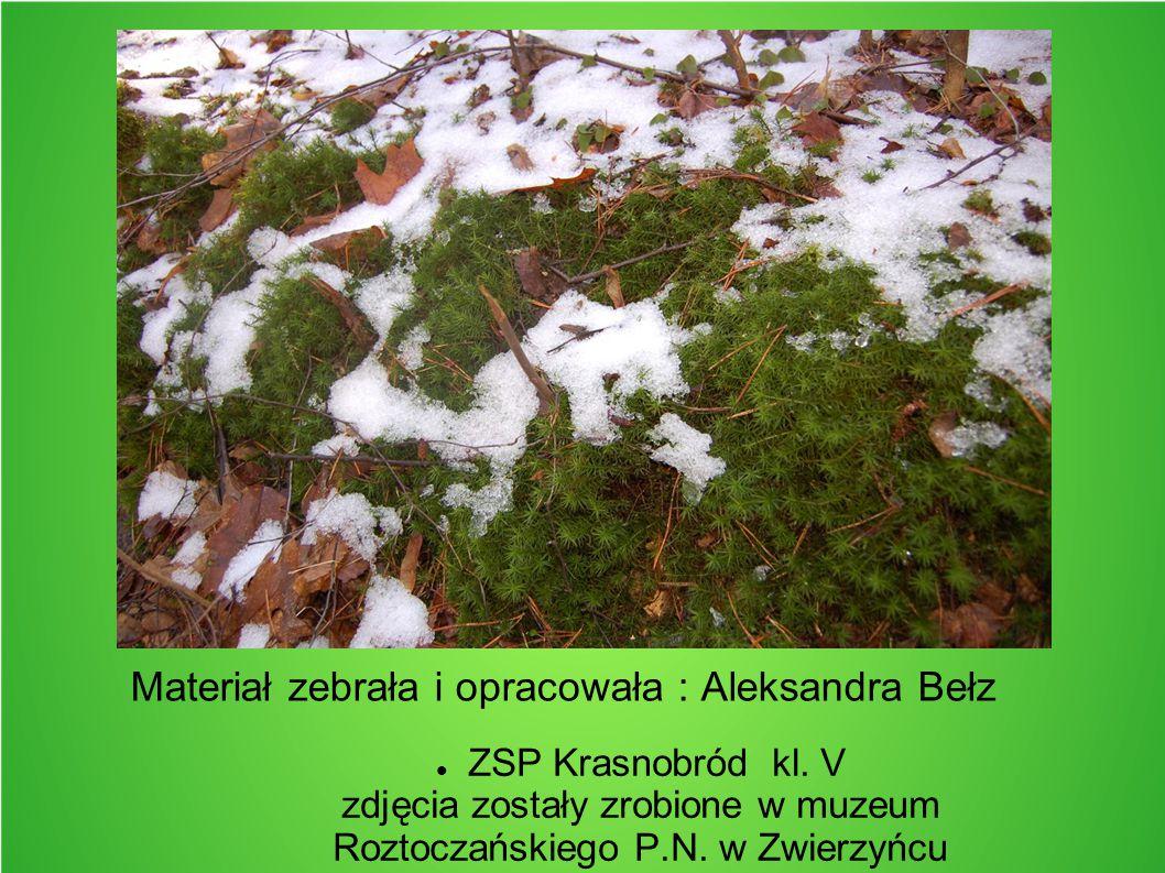 Materiał zebrała i opracowała : Aleksandra Bełz ZSP Krasnobród kl. V zdjęcia zostały zrobione w muzeum Roztoczańskiego P.N. w Zwierzyńcu