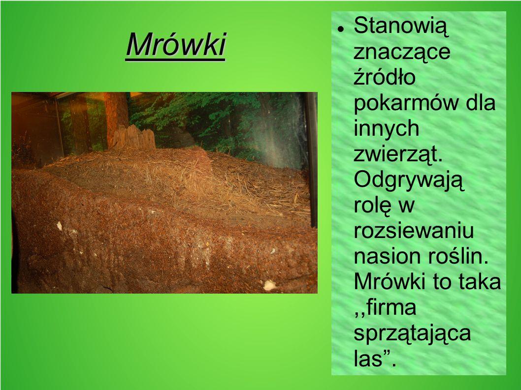 """Mrówki Stanowią znaczące źródło pokarmów dla innych zwierząt. Odgrywają rolę w rozsiewaniu nasion roślin. Mrówki to taka,,firma sprzątająca las""""."""