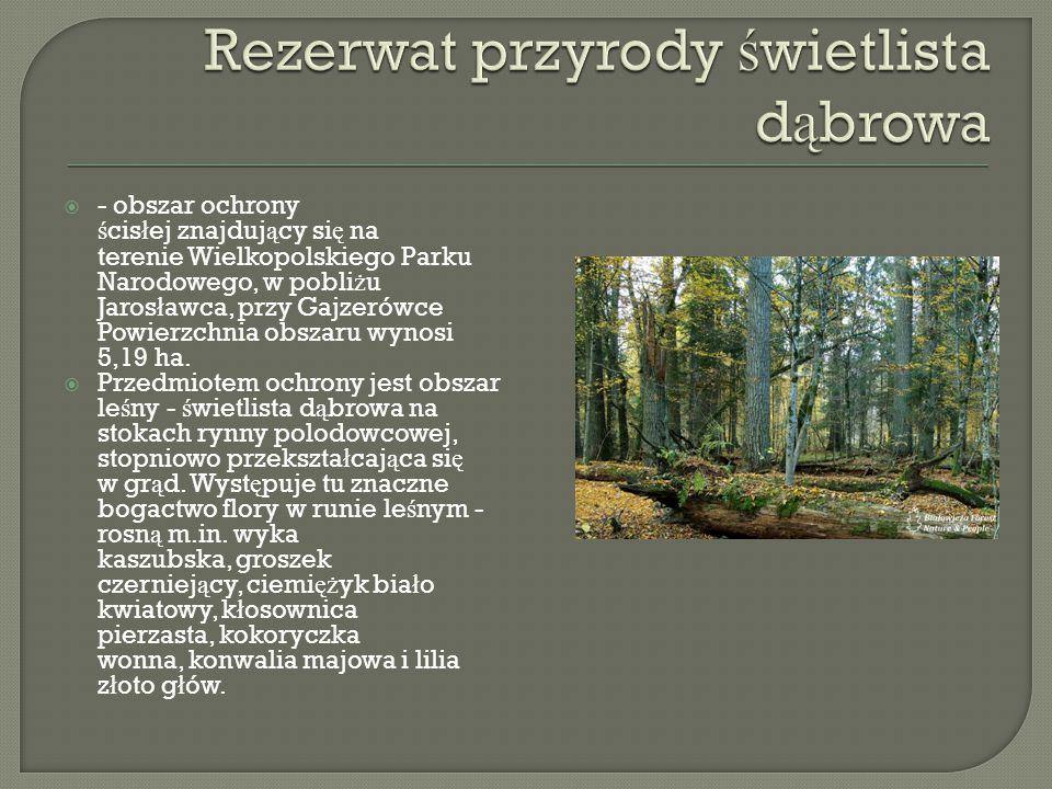  - obszar ochrony ś cis ł ej znajduj ą cy si ę na terenie Wielkopolskiego Parku Narodowego, w pobli ż u Jaros ł awca, przy Gajzerówce Powierzchnia obszaru wynosi 5,19 ha.