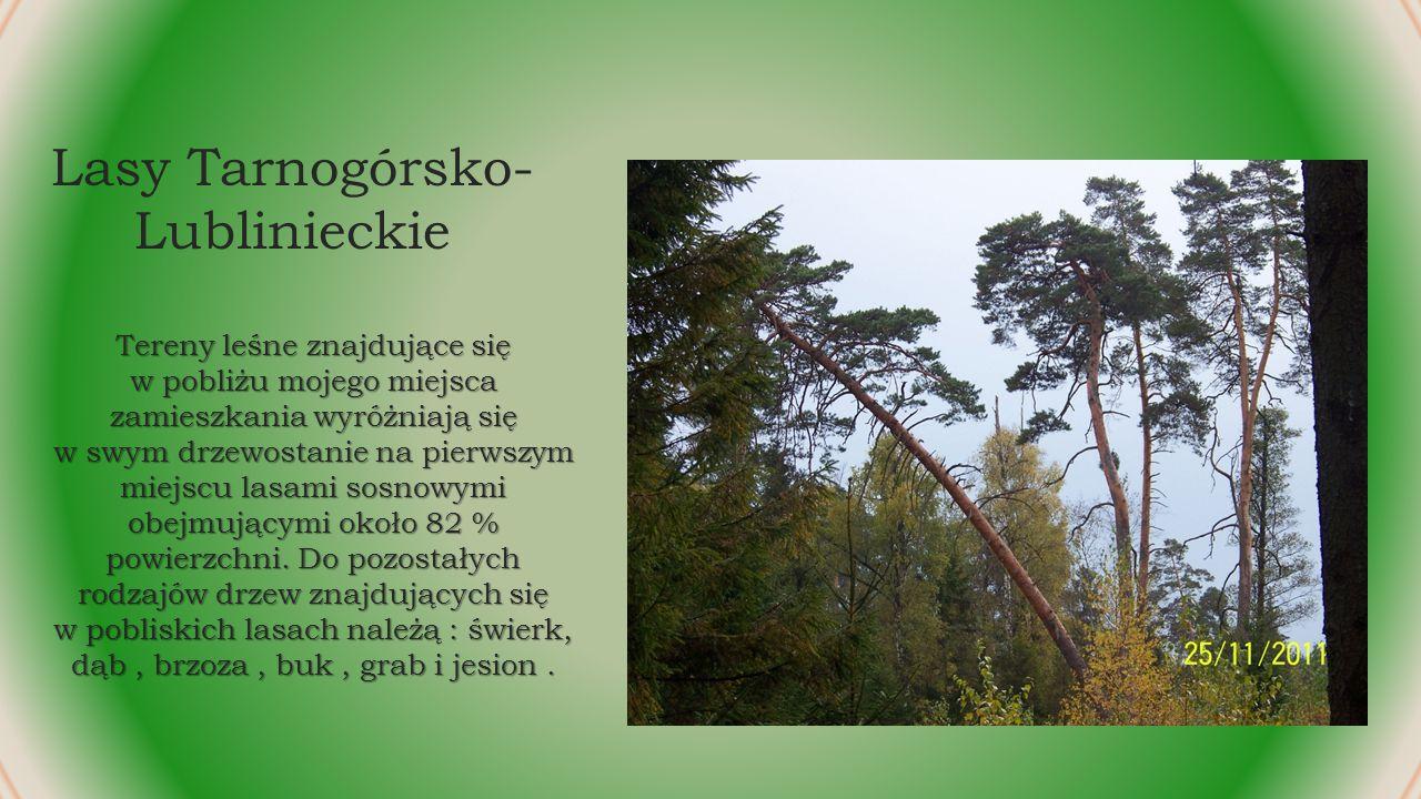 Lasy Tarnogórsko- Lublinieckie Tereny leśne znajdujące się w pobliżu mojego miejsca zamieszkania wyróżniają się w swym drzewostanie na pierwszym miejscu lasami sosnowymi obejmującymi około 82 % powierzchni.