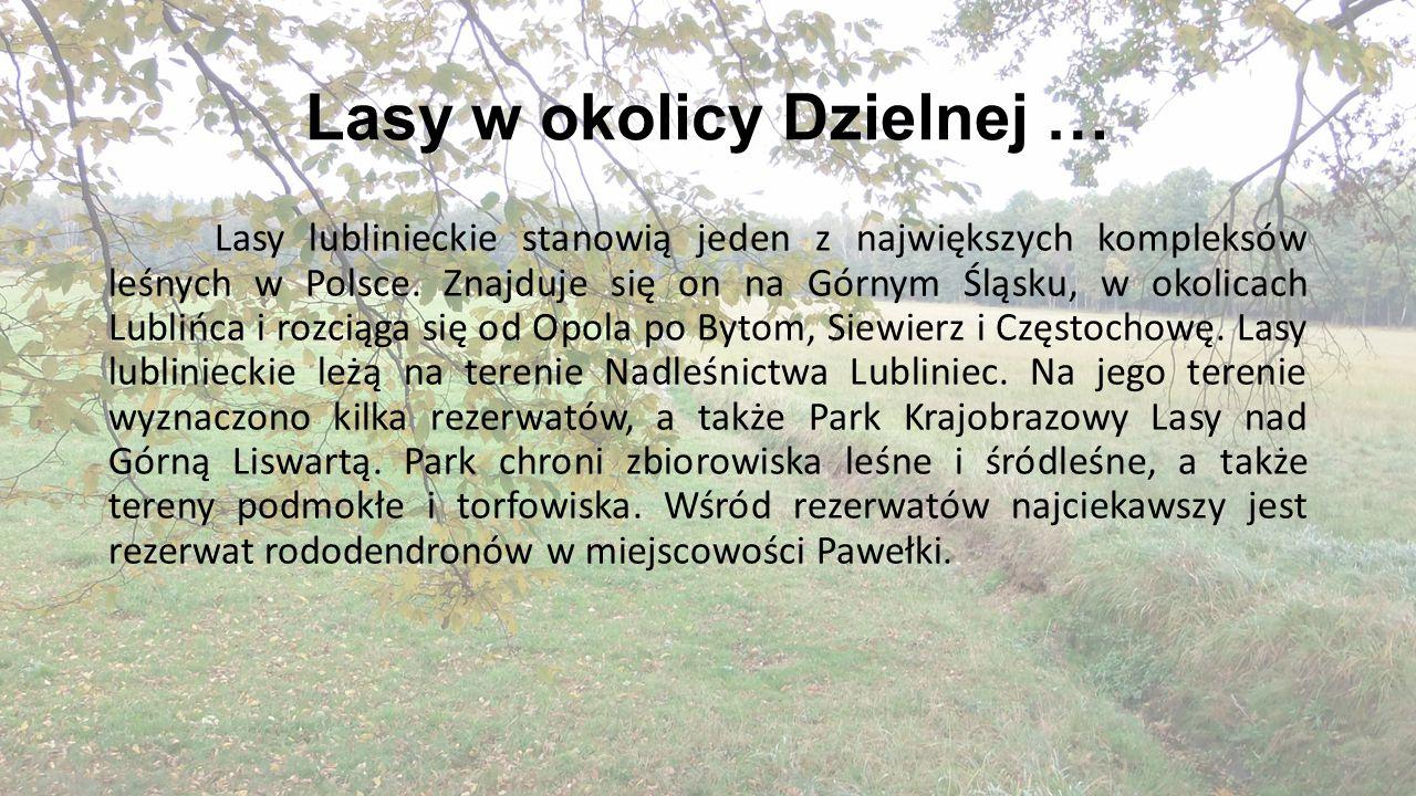 Lasy w okolicy Dzielnej … Lasy lublinieckie stanowią jeden z największych kompleksów leśnych w Polsce. Znajduje się on na Górnym Śląsku, w okolicach L