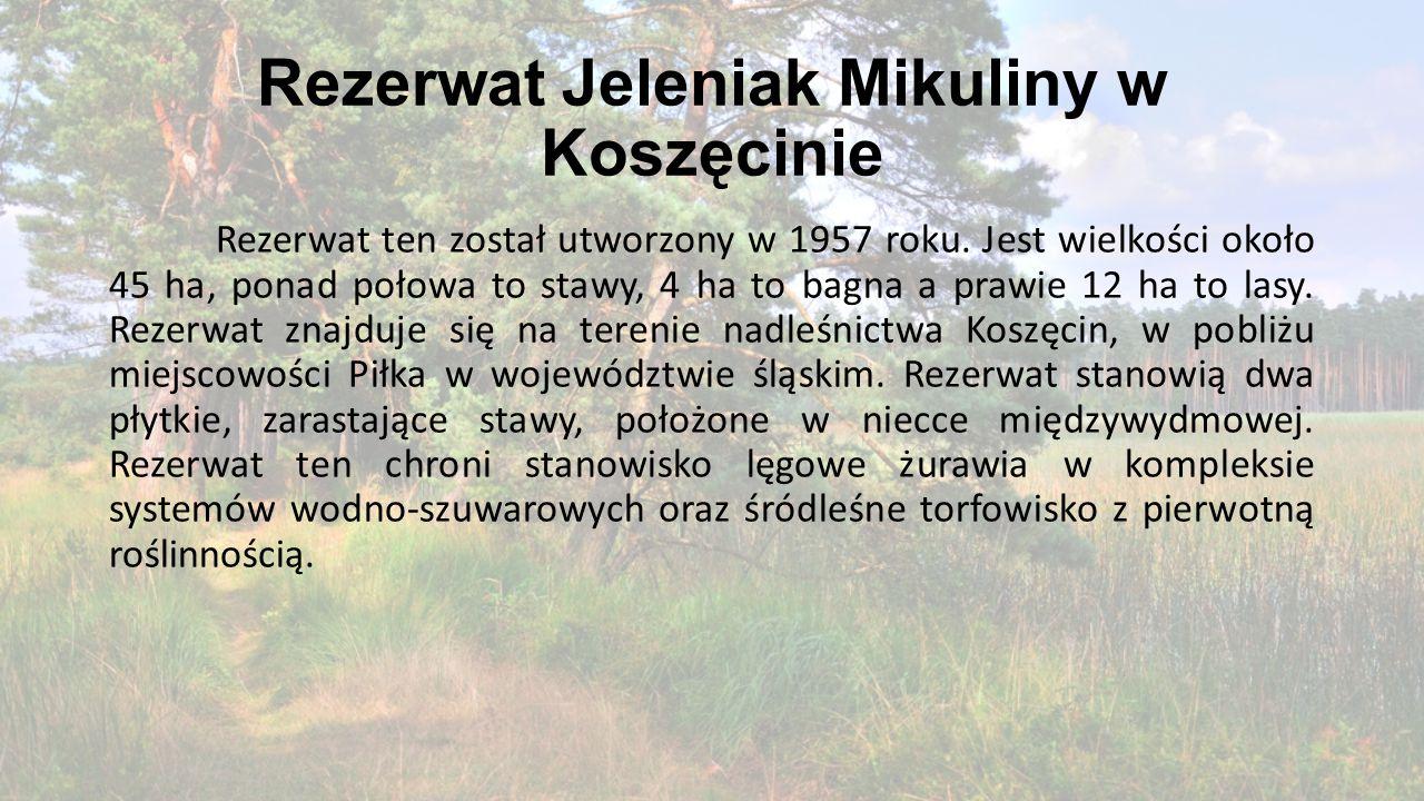 Rezerwat Jeleniak Mikuliny w Koszęcinie Rezerwat ten został utworzony w 1957 roku. Jest wielkości około 45 ha, ponad połowa to stawy, 4 ha to bagna a