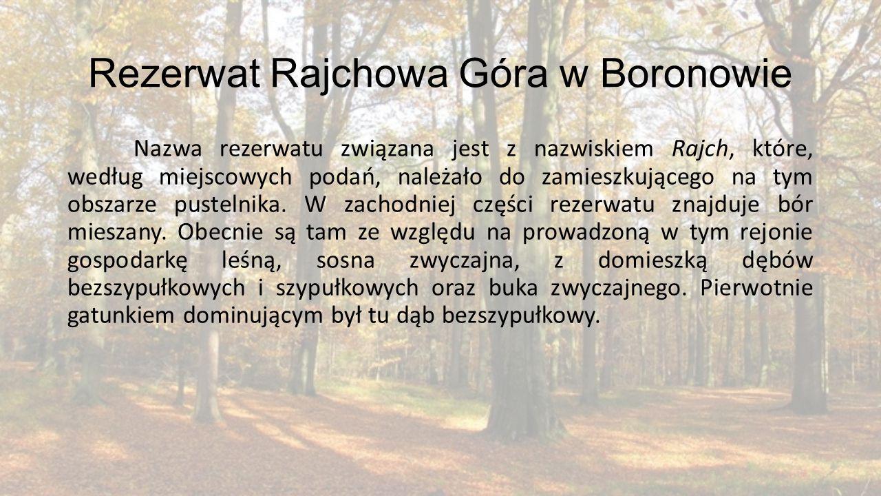 Rezerwat Rajchowa Góra w Boronowie Nazwa rezerwatu związana jest z nazwiskiem Rajch, które, według miejscowych podań, należało do zamieszkującego na t