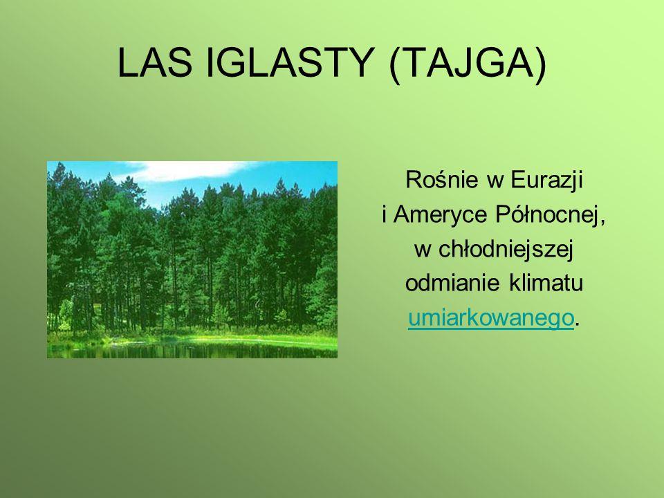 LAS IGLASTY (TAJGA) Rośnie w Eurazji i Ameryce Północnej, w chłodniejszej odmianie klimatu umiarkowanegoumiarkowanego.