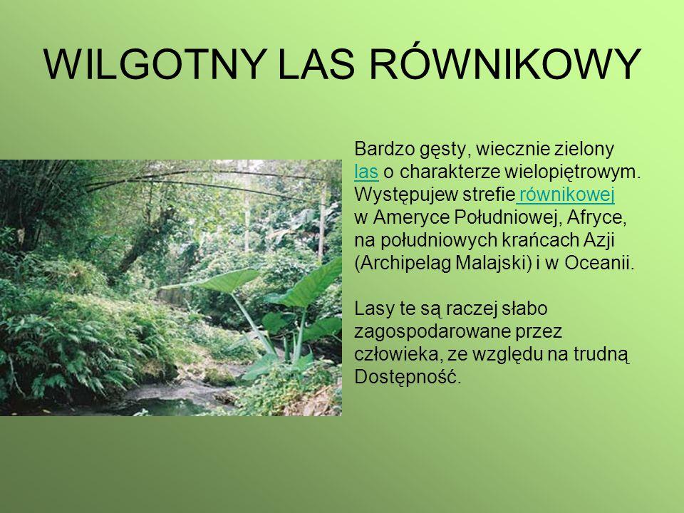 WILGOTNY LAS RÓWNIKOWY Bardzo gęsty, wiecznie zielony laslas o charakterze wielopiętrowym. Występujew strefie równikowej równikowej w Ameryce Południo