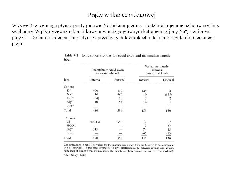 Przestrzenny rozkład potencjału w korze Doświadczalne zapisy rozkładu potencjału w korze motorycznej szczura.